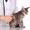 Ветеринарные клиники в Дубовском